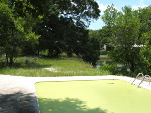Homes for Sale in Pinellas County including this Lovely Dunedin Swamp