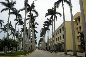 Fort myers plam trees