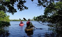 kayaking in cape coral