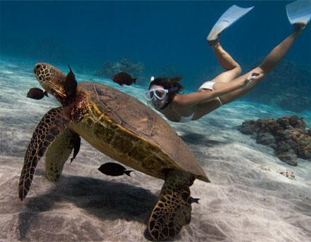 Best Snorkeling Spots On Maui