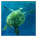 Snorkeling in Hana