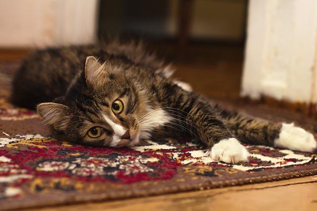How to Keep Carpets Clean in the Peak Real Estate Season