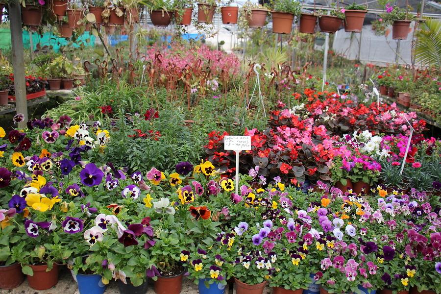 Plant a garden on Zanesville property.