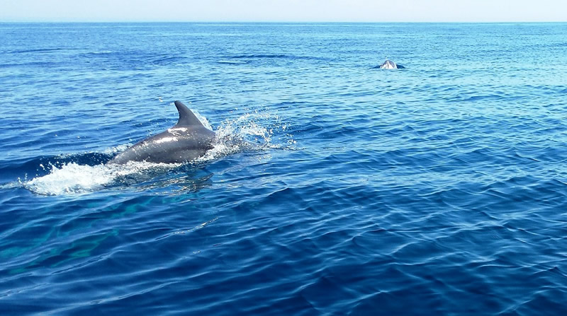 Dolphins Surface By Holden Beach Real Estate