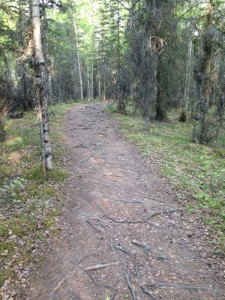 Russian Jack Running Trail