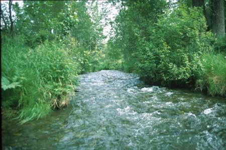 Rabbit Creek Porcupine Trail