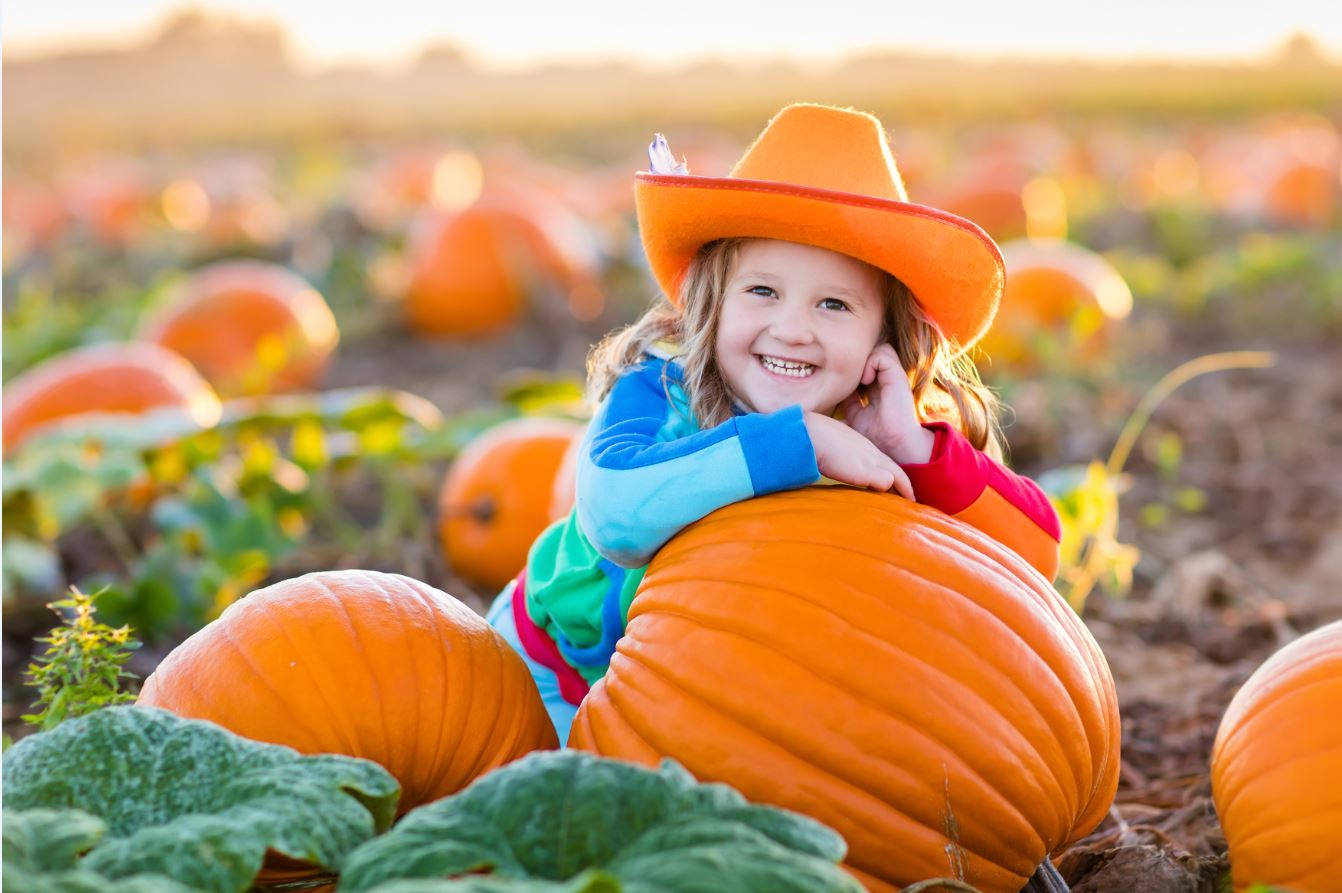 Austin, Texas, Pumpkin Patches, Pure Gold Realty, Fall