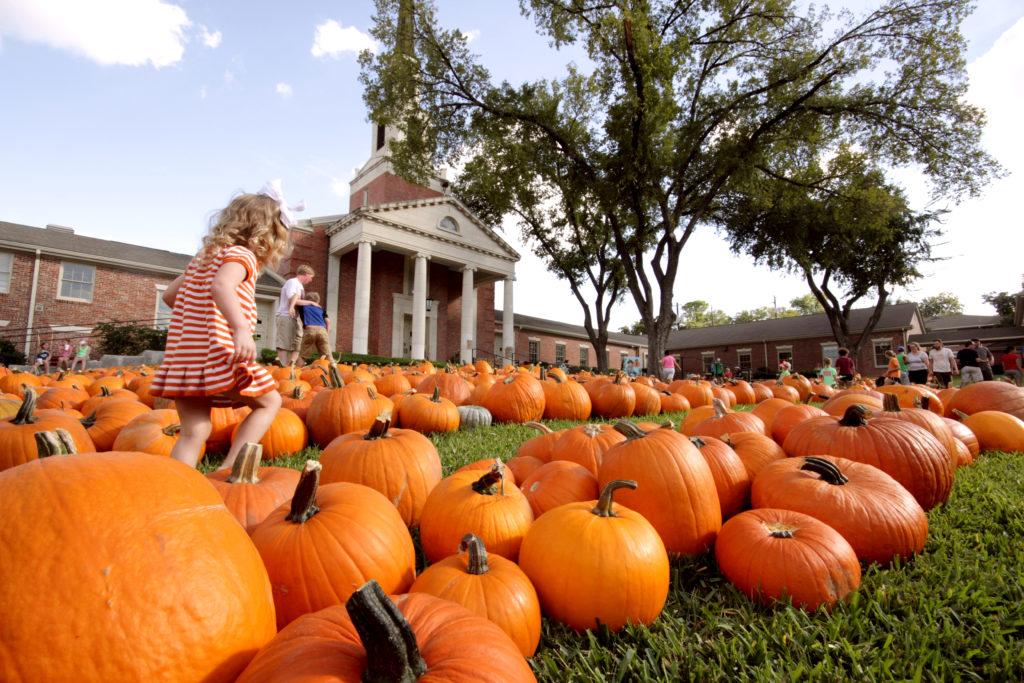 Pumpkin Patch, Austin, Texas, Tarrytown, Pure Gold Realty