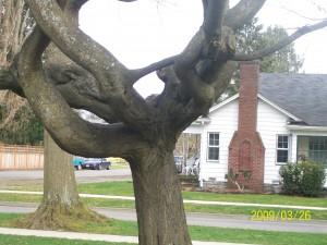 Great climbing tree.