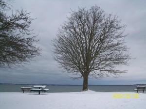 Boulevard Tree
