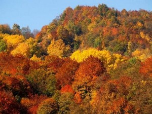 1776019-The-Colours-of-Autumn-1