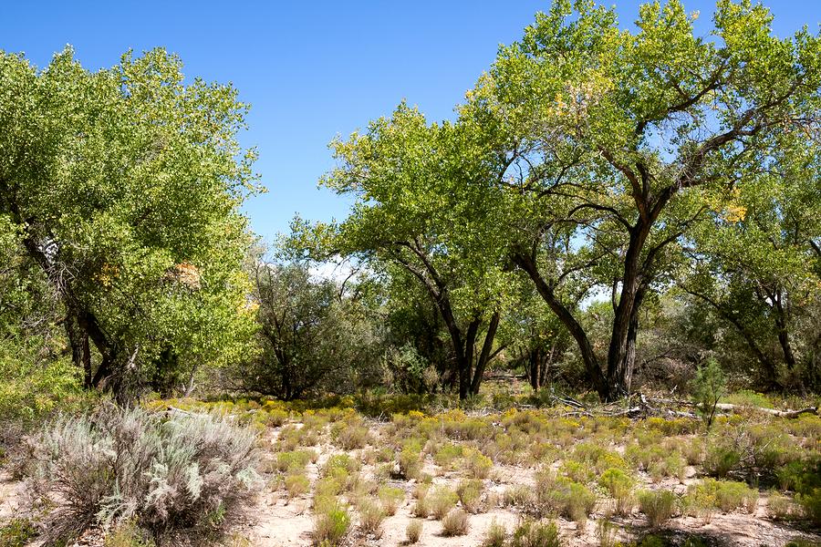 Explore natural Albuquerque property.