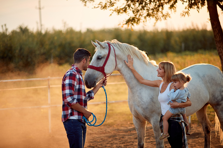 Discover Sedona horse properties.