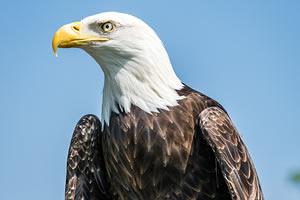 Sedona property owners see wildlife