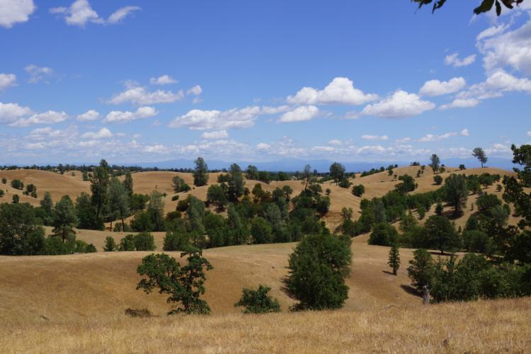 Cavant land