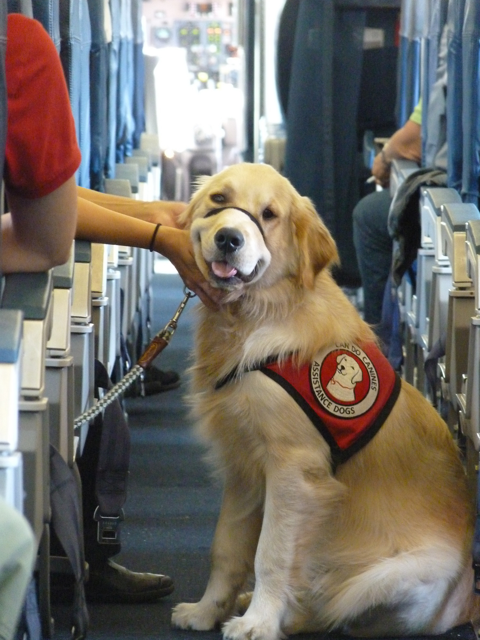 How do i move my pets to kauai for Delta airlines dogs in cabin