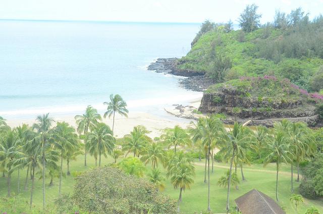 National tropical botanical garden on kauai raises 280k - National tropical botanical garden kauai ...