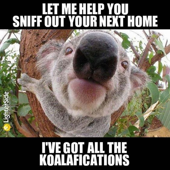 Kolalafications