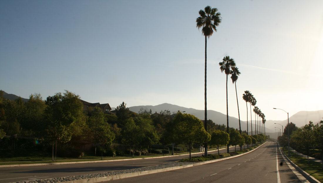 Corona CA real estate palms
