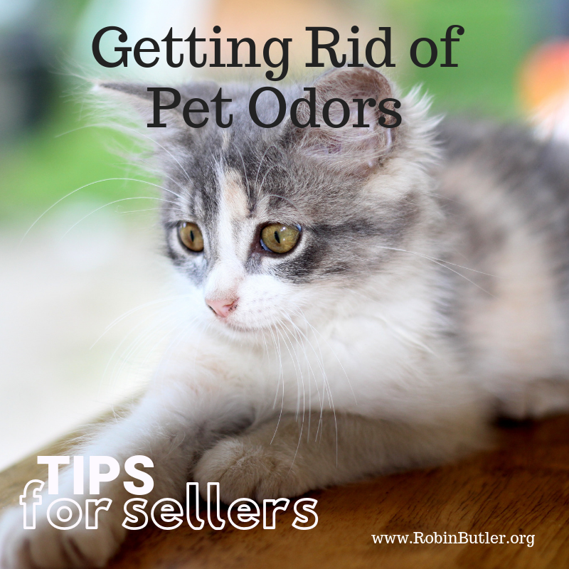 getting rid of pet odors