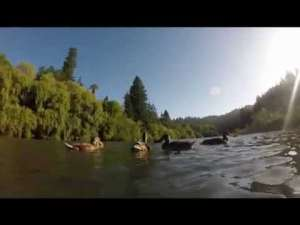 Russian River Real Estate