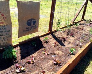 Vegetable Garden In Monte Rio
