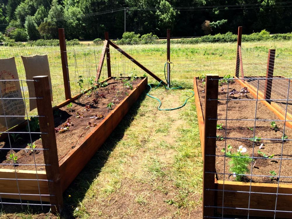 First Planted Garden In Community Garden