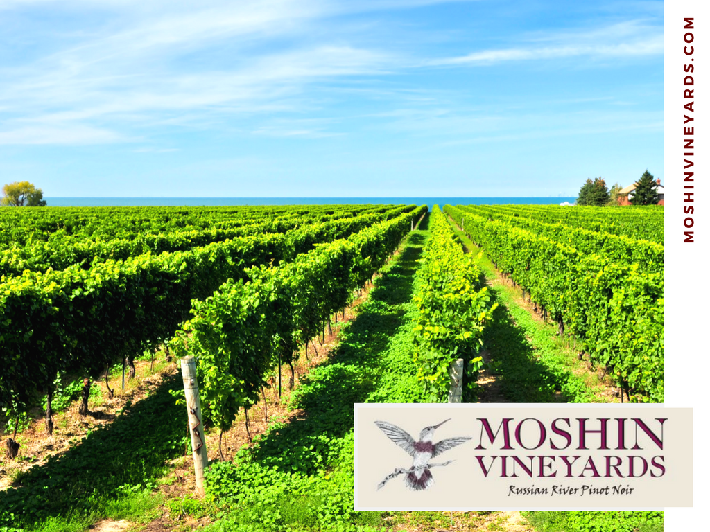 moshin vineyards russian river