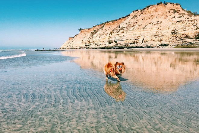 5 Reasons Why Del Mar San Diego Is a Great Place to Live in 2019