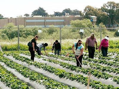 homeless garden project in santa cruz
