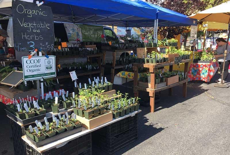 scotts valley farmers market