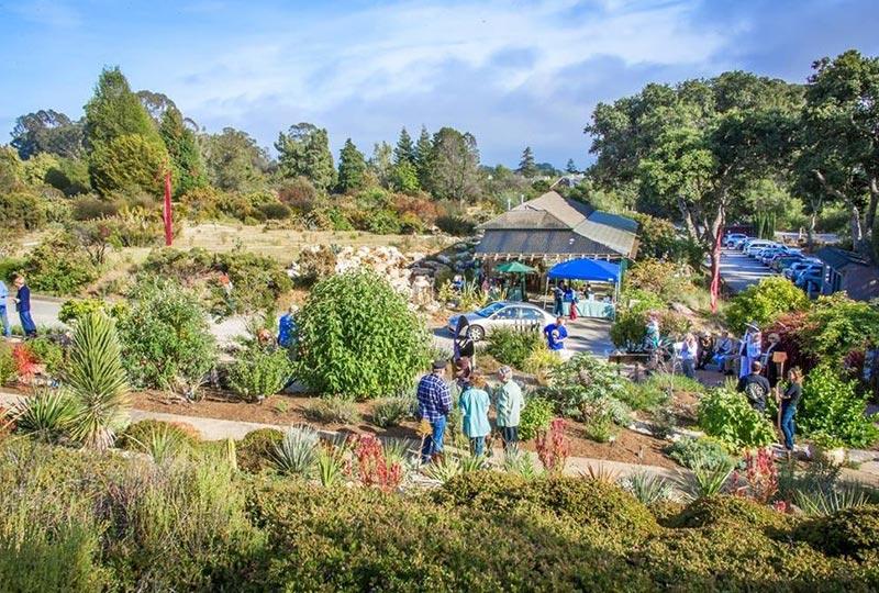 ucsc arboretum and garden