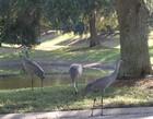Florida's Wildelife