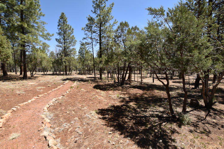 Pine Trees and Cabins
