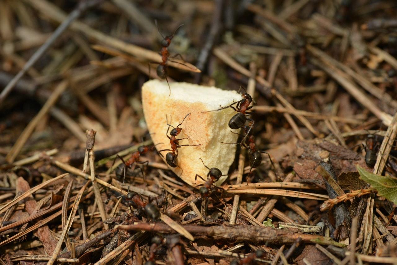 pest inspection Sean Jones Locust Grove, VA