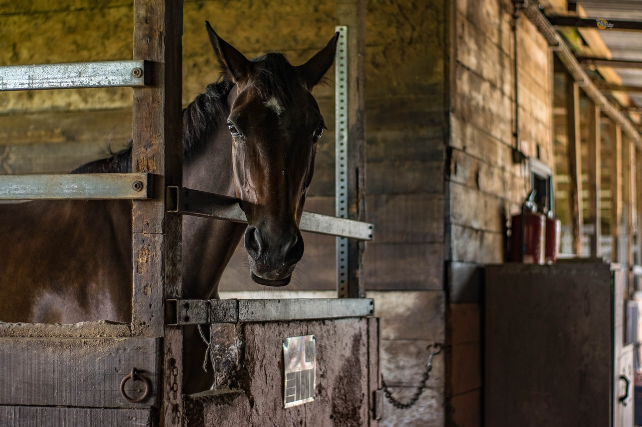 homes for sale with riding stables around locust grove Virginia