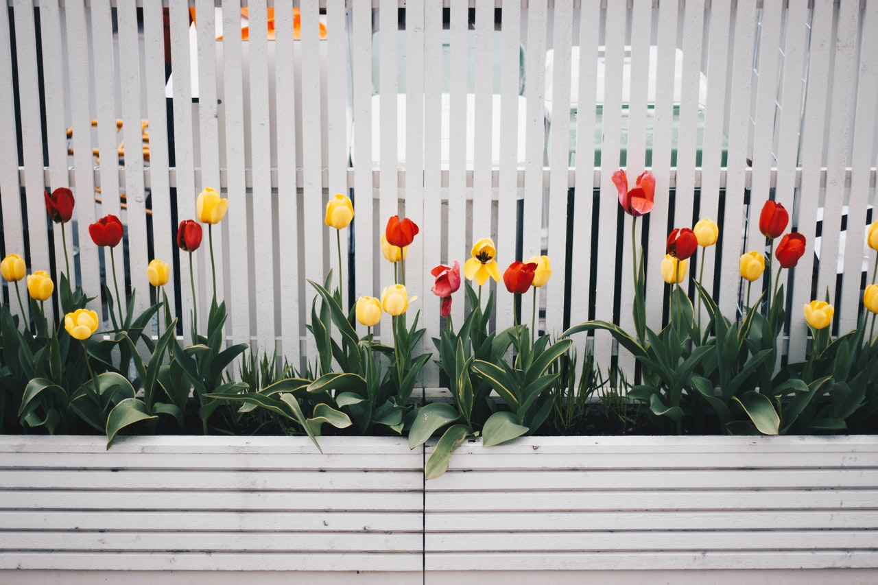 White picket fence with roses out front