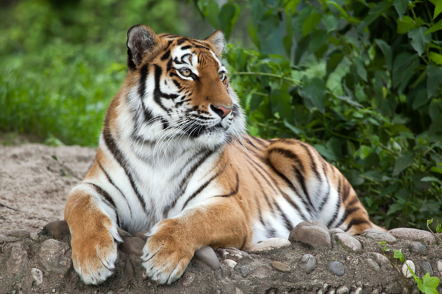 Visit the Riverbanks Zoo and Gardens near Columbia SC homes.