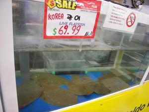 Expensive flatfish