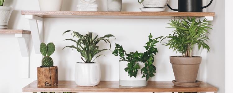 5 Houseplants Every Homeowner Needs