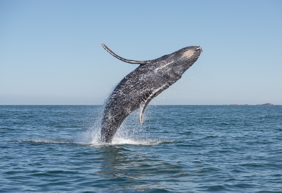 Go whale watching on Dana Point real estate.