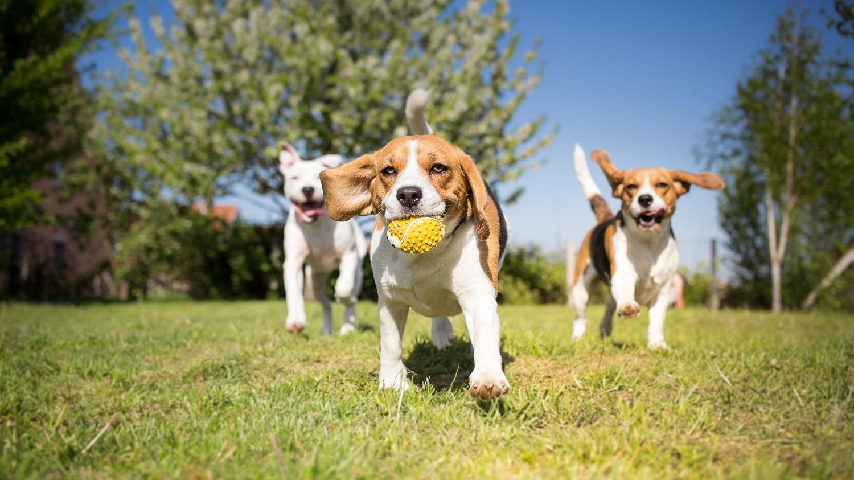 Charleston dog parks