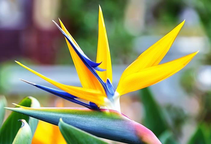 best plants for subtropical gardens