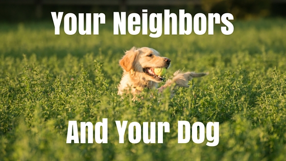 How to Ensure Your Dog is the Most Popular Neighbor on the Block