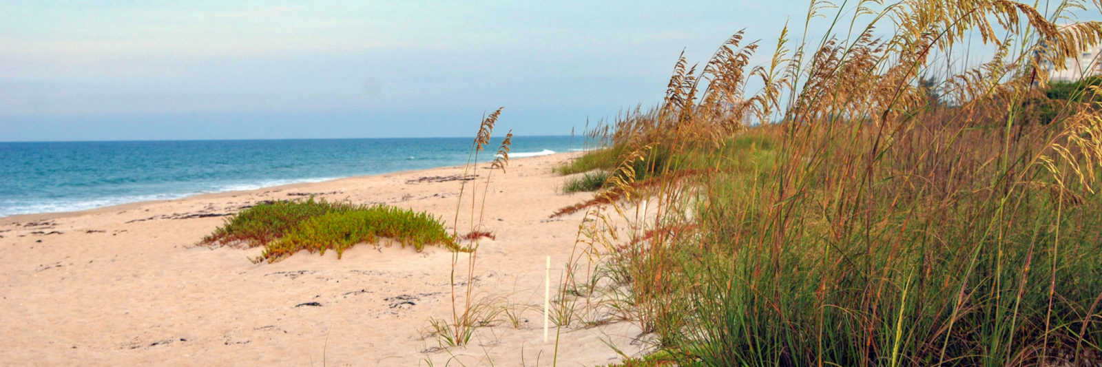 Avalon State Park Beach