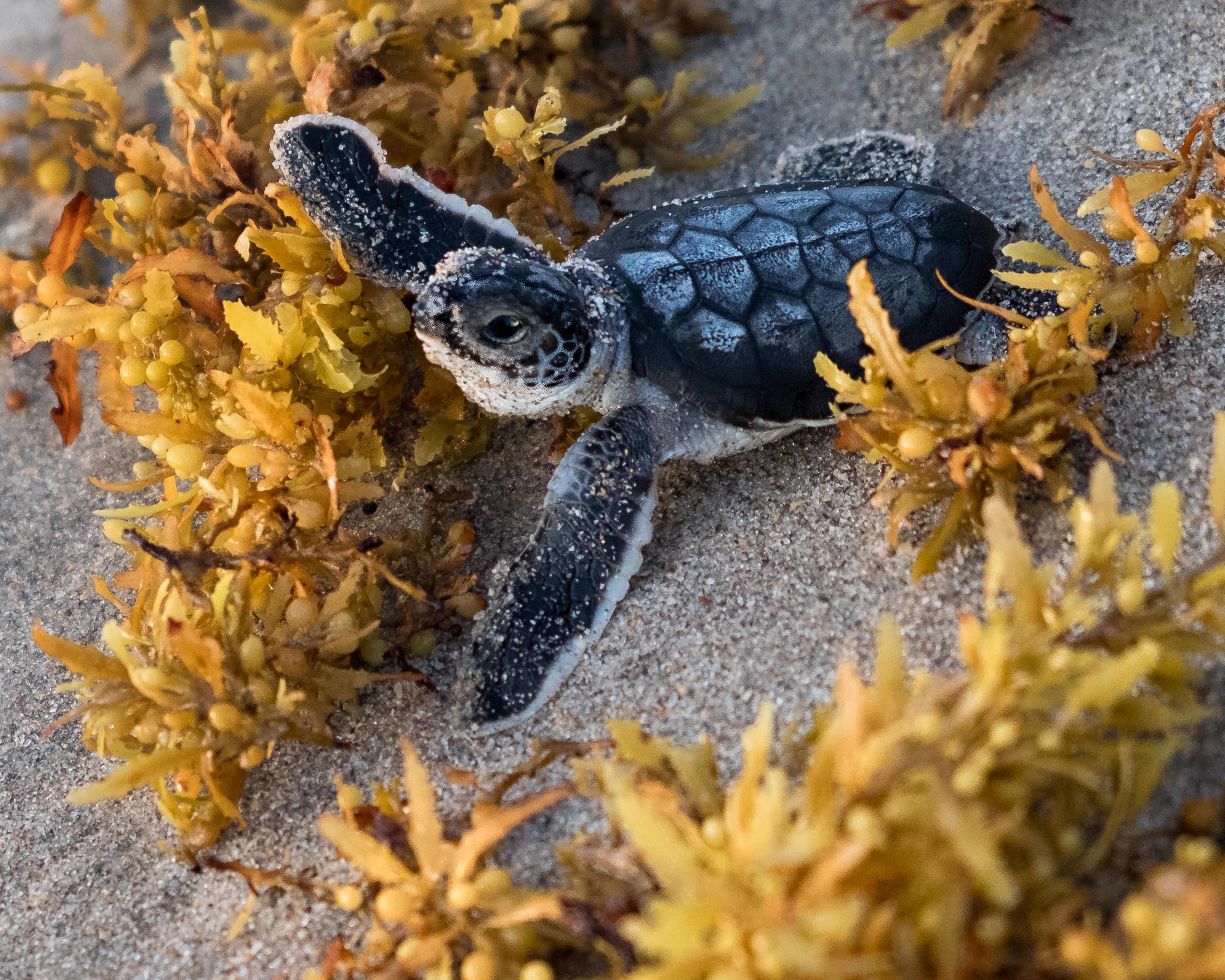 Stuart Fl Area Parks Baby Turtle