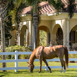 Stuart Houses For Sale Equestrian Homes