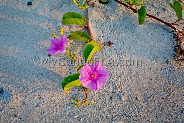 Xanadu Condos Cocoa Beach, FL Terry Palmiter