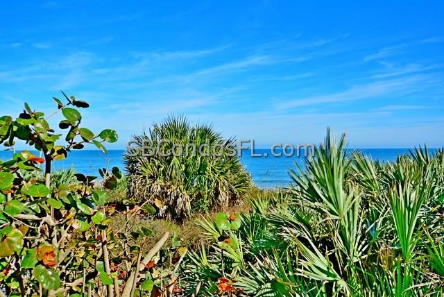 Gardenia Oceanfront Condo Satellite Beach FL Terry Palmiter