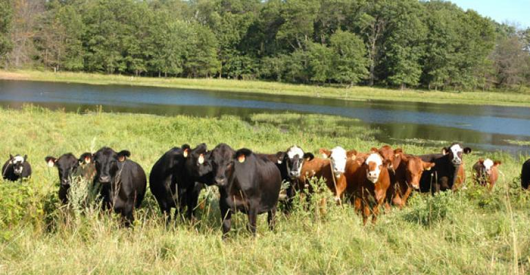 Texas Premier Ranch Realty | Texas Hill Country and South Texas Ranches for Sale